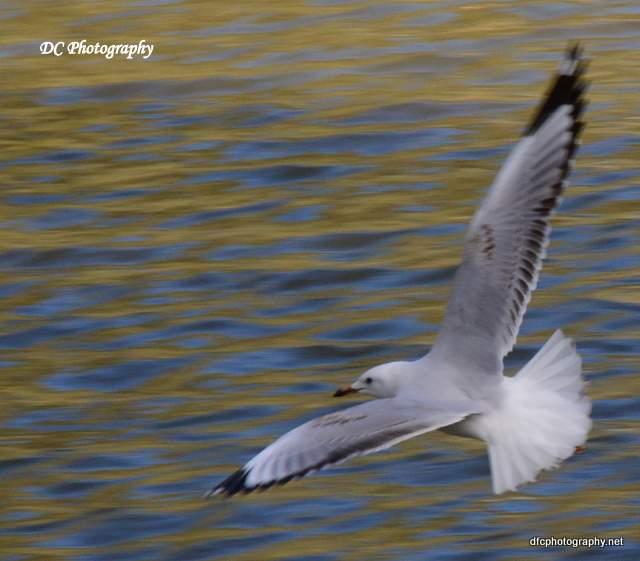seagull_0123