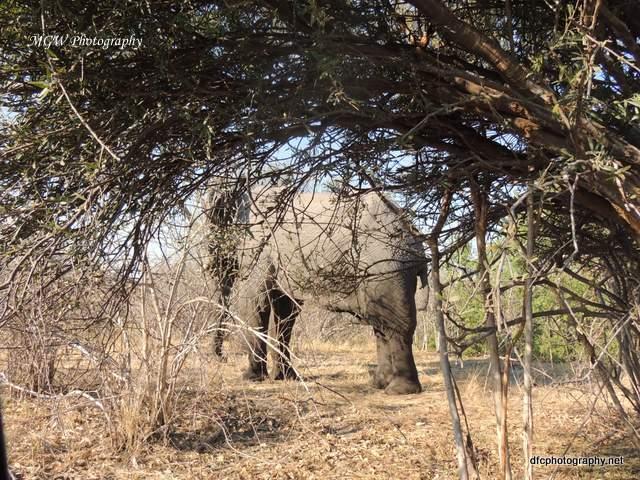 elephant_dscn2145