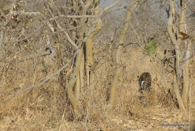 leopard_dscn2146