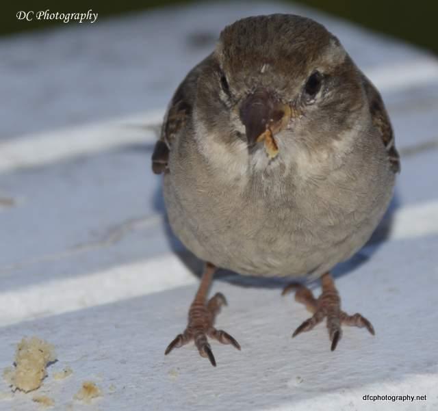 sparrow_4878