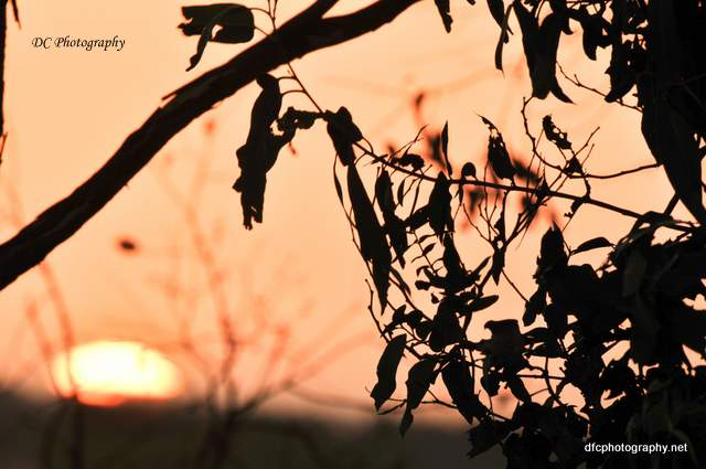 sunset-1_2_0187