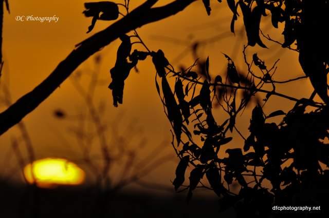 sunset-4_-1_0187
