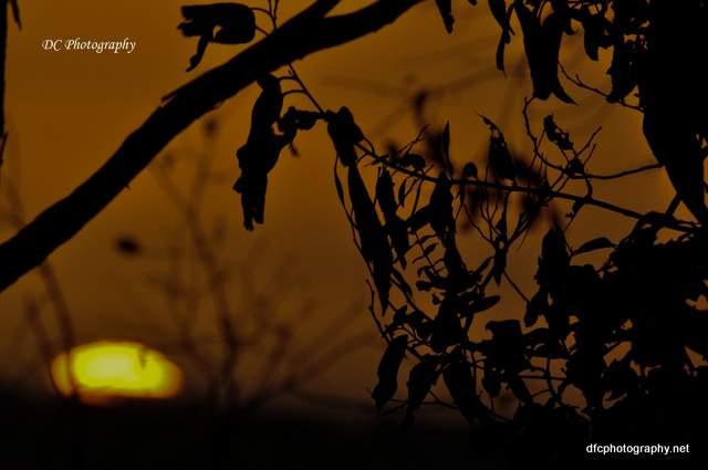 sunset-5_-2_0187