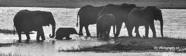 This image has an empty alt attribute; its file name is baby-elephant_0128.jpg